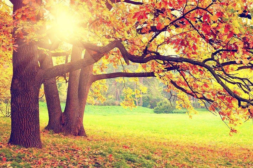 כבר הסתיו הגיע